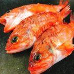 底曳き漁で獲れる魚をご紹介! 第6回 ユメカサゴ
