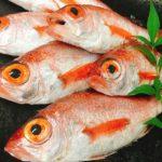 底曳き漁で獲れる魚をご紹介! 第3回 ノドグロ(赤ムツ)